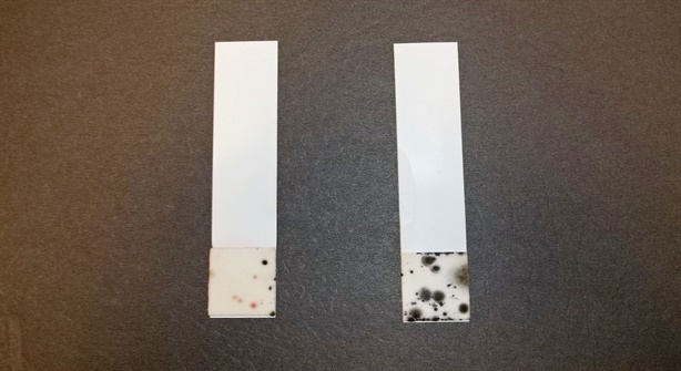 The test strip on the left shows the presence of bacteria in diesel fuel, while the one on the right shows the presence of fungus and mold. Photo: Bell Performance