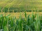 U.S. Senators Seeking Repeal of Ethanol Mandate